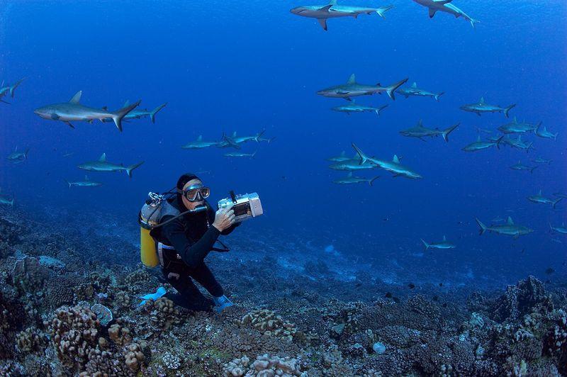 Ron Taylor with grey reef sharks (Carcharhinus amblyrhynchos) (Fakarava - South Pass)