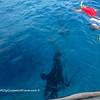 BOB Swim with the Manta Rays and Sharks Excursion