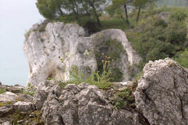 Kalkfelsen bei Duino