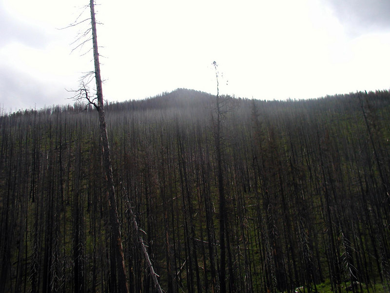 Forrest fire here not too long ago....real ugly