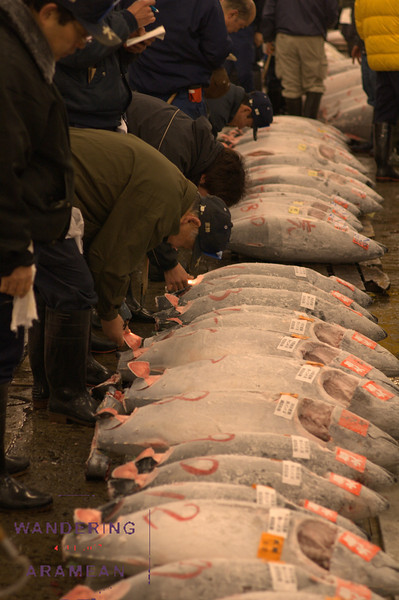 Inspecting the tuna at Tsukiji