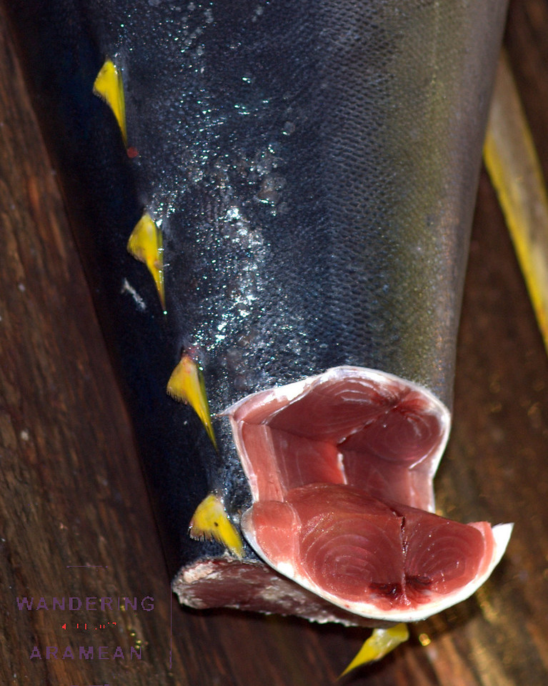 Yellow-fin tuna, fresh off the boat