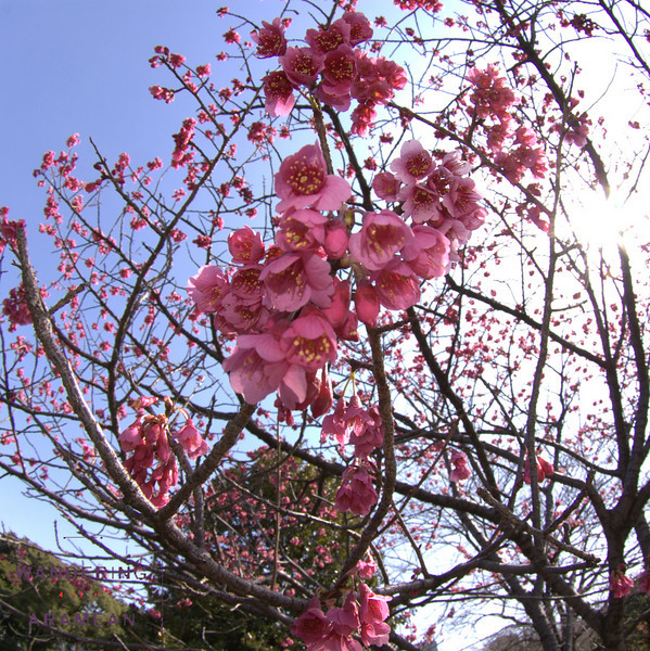 Flowers at the Imperial Palace