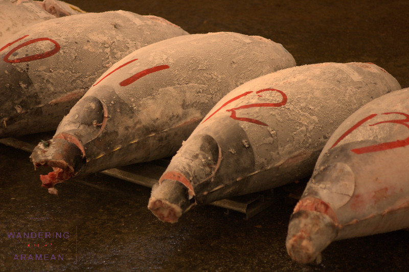 Tuna up for auction at Tsukiji