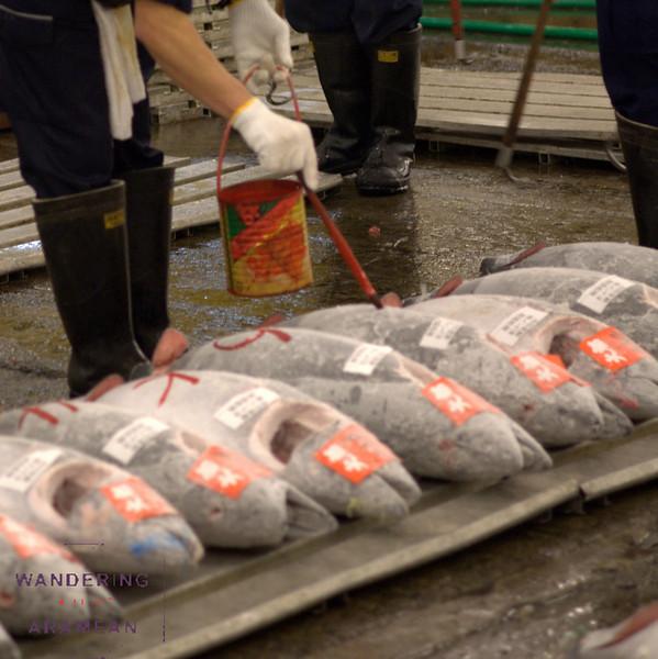 Tagging the tuna at Tsukiji