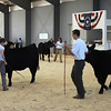 Black Angus Competition