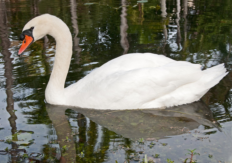 • Bonnet House Museum and Garden<br /> • Mute Swan
