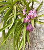 • Bonnet House Museum and Garden<br /> • Orchid