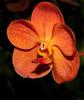 • Bonnet House Museum and Garden<br /> • Orchid