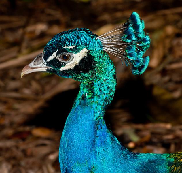 • Flamingo Gardens<br /> • Indian Blue Peacock