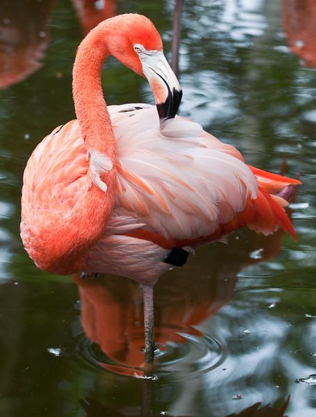 • Flamingo Gardens<br /> • Greater Flamingo