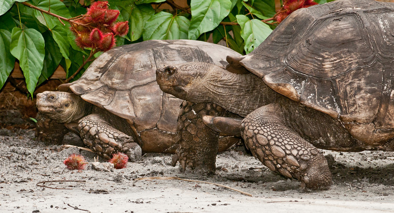 • Flamingo Gardens<br /> • Gopher Tortoises