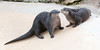 • Flamingo Gardens<br /> • River Otter<br /> • How about a kiss?