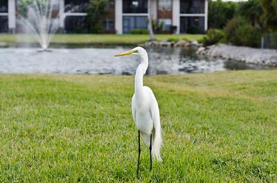 Egret, Davis Lake Condos, Ft Myers, FL