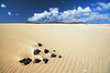 """Black rocks in the desert  <br> <form target=""""paypal"""" action=""""https://www.paypal.com/cgi-bin/webscr"""" method=""""post""""> <input type=""""hidden"""" name=""""cmd"""" value=""""_s-xclick""""> <input type=""""hidden"""" name=""""hosted_button_id"""" value=""""VBPHPSRPTKZAW""""> <table> <tr><td><input type=""""hidden"""" name=""""on0"""" value=""""Buy a digital copy:"""">Buy a digital copy:</td></tr><tr><td><select name=""""os0""""> <option value=""""Digital download (hi-res)"""">Digital download (hi-res) €100.00 EUR</option> </select> </td></tr> </table> <input type=""""hidden"""" name=""""currency_code"""" value=""""EUR""""> <input type=""""image"""" src=""""https://www.paypalobjects.com/en_US/i/btn/btn_cart_LG.gif"""" border=""""0"""" name=""""submit"""" alt=""""PayPal - The safer, easier way to pay online!""""> <img alt="""""""" border=""""0"""" src=""""https://www.paypalobjects.com/en_US/i/scr/pixel.gif"""" width=""""1"""" height=""""1""""> </form>"""