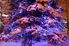 Alaska_Christmas_2012_Raw155