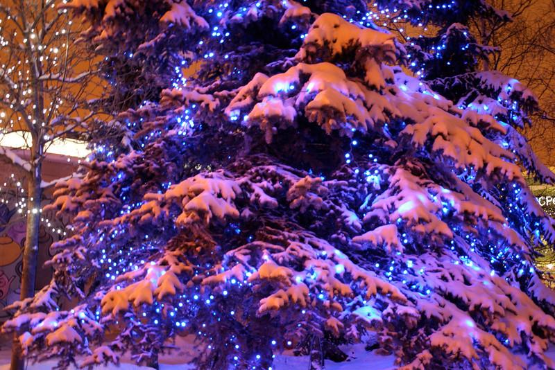 Alaska_Christmas_2012_Raw154