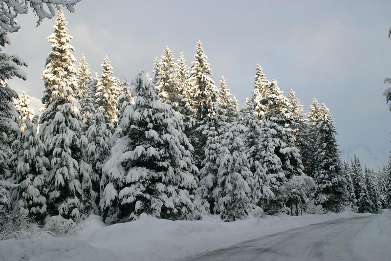 Alaska_Christmas_2012_Raw185
