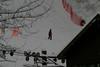Alaska_Christmas_2012_Raw190