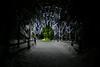 Alaska_Christmas_2012_Raw176