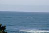 Miata_Drive_Coast_2013_0052_2