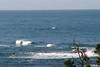 Miata_Drive_Coast_2013_0078