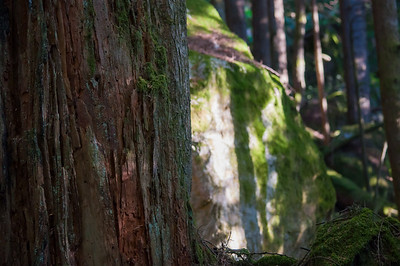 Fundamental Beauty: The Squamish Forest