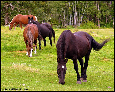 """THREE PLUS ONE"", Glenora Guest Ranch, B.C., Canada-----""TRI PLUS JEDEN""."