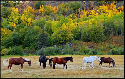 """ON THE PASTURE"",Glenora Guest Ranch,B.C.,Canada."