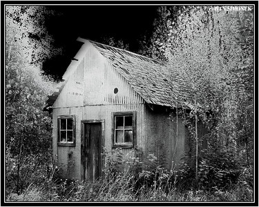 """SPOOKY"", Glenora Guest Ranch, B.C., Canada."