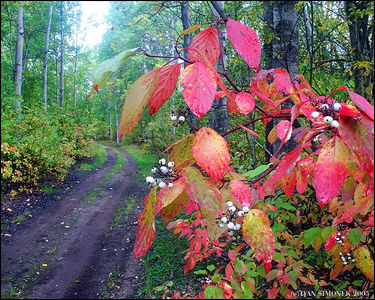 """WILDERNESS  TRAIL"",B.C.,Canada-----""STEZKA DIVOCINOU"",B.K.,Kanada."