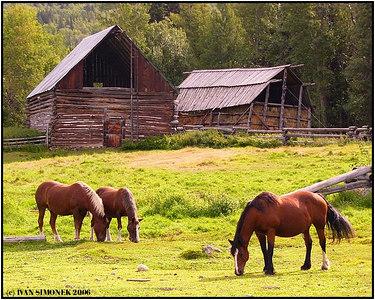 """""""NO WORRIES"""", Glenora Guest Ranch, B.C., Canada-----""""BEZ STAROSTI"""", Glenora Guest Ranch, B.K., Kanada."""