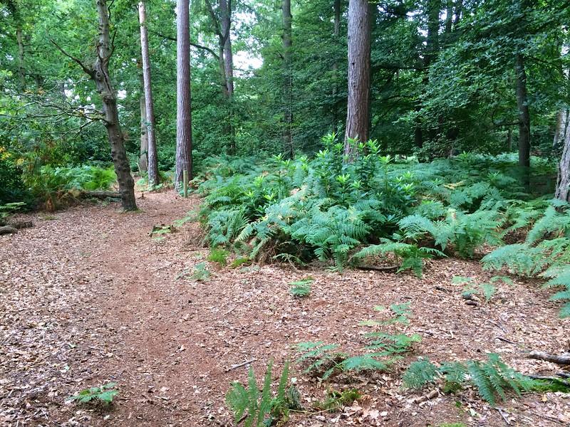 Ampfield: Trail near St Mark's Church