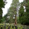 Ampfield: St Mark's Church: Churchyard with Sequoia
