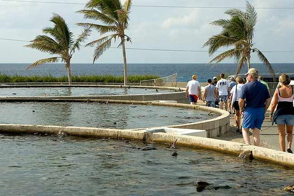 """GRAND CAYMAN TURTLE FARM"""