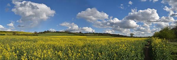 Yellow fields of oilseed rape