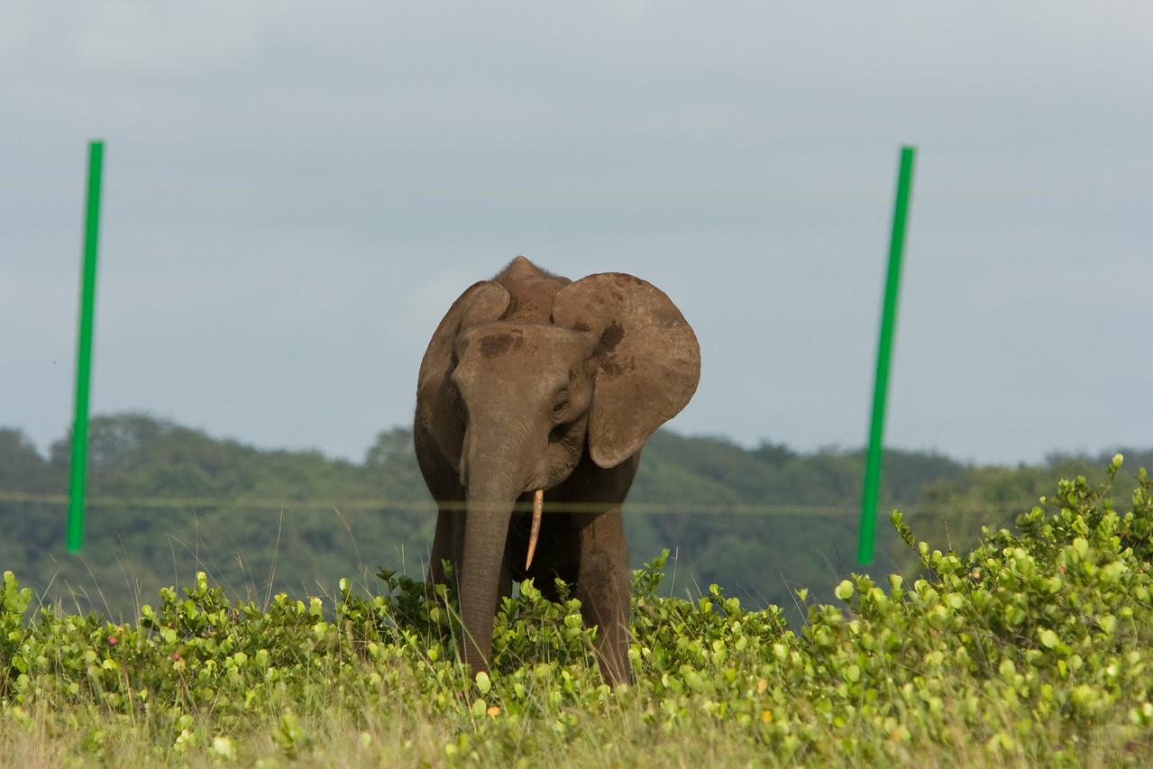 The elephant that visited our camp.