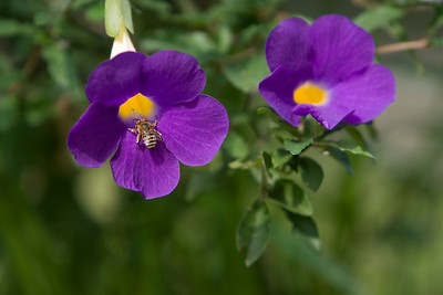 Purple flower with bee.