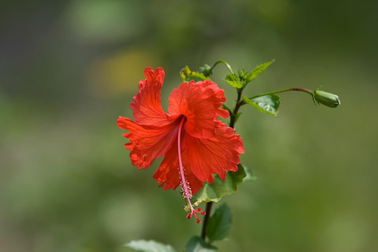 Flower at Evengue Island.