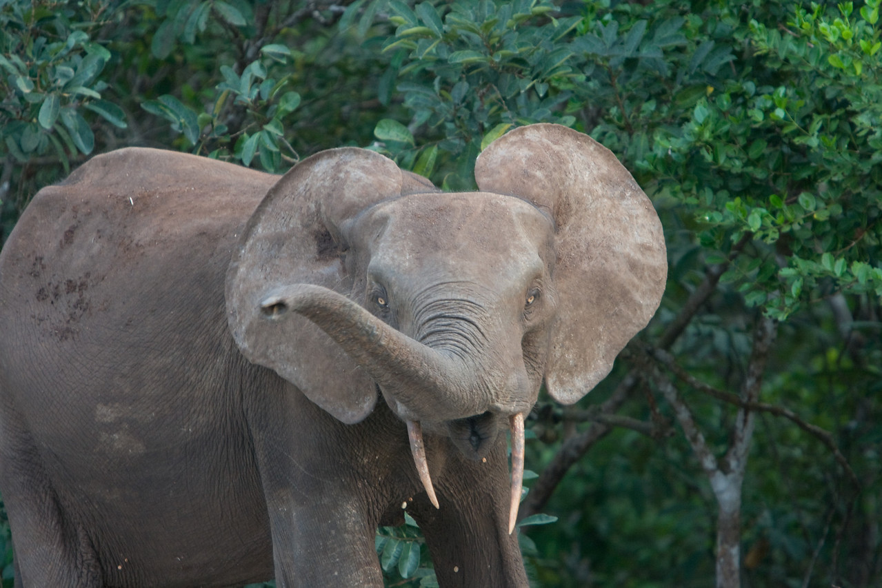 Our friendly elephant.