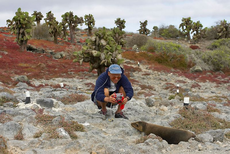 Manny photographs a sea lion pup (Galapagos - South Plazas)