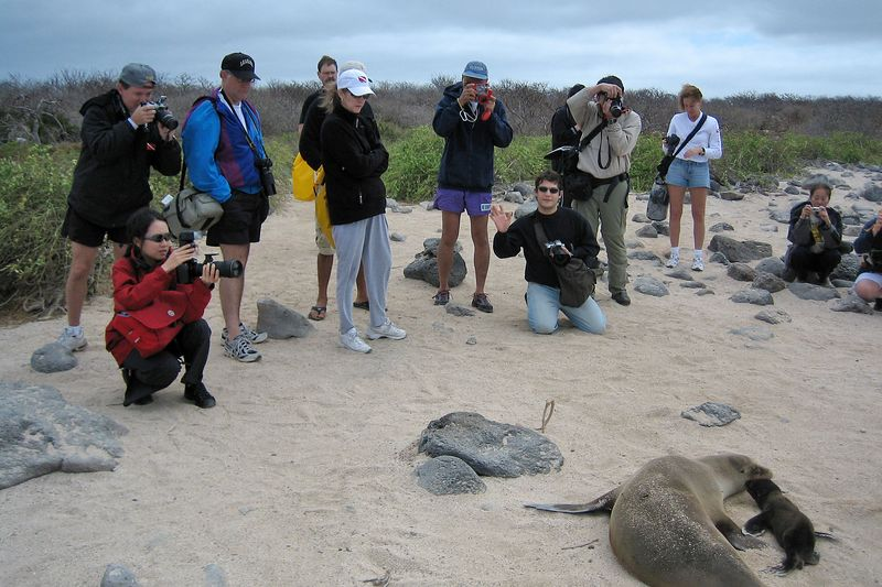 Our group photographs a a newborn Galapagos sea lion (Zalophus californianus wollebaeki) with its mother (Galapagos - North Seymour)