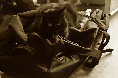 Indy helps me pack for the trip...ummm, not so much
