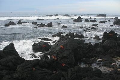 Crabs on Isabela, Urbina Bay