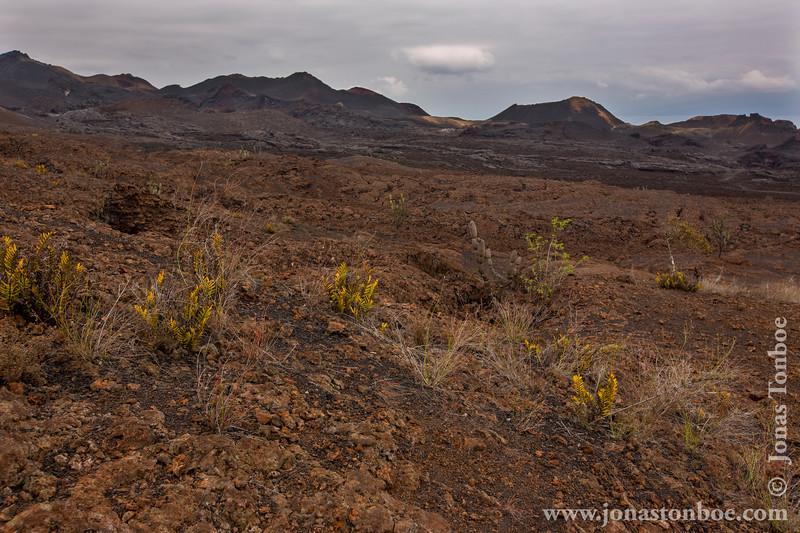 Lava Landscape