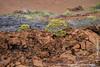 Lava Landscape and Vegetation