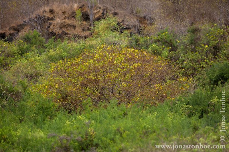 Island Vegetation