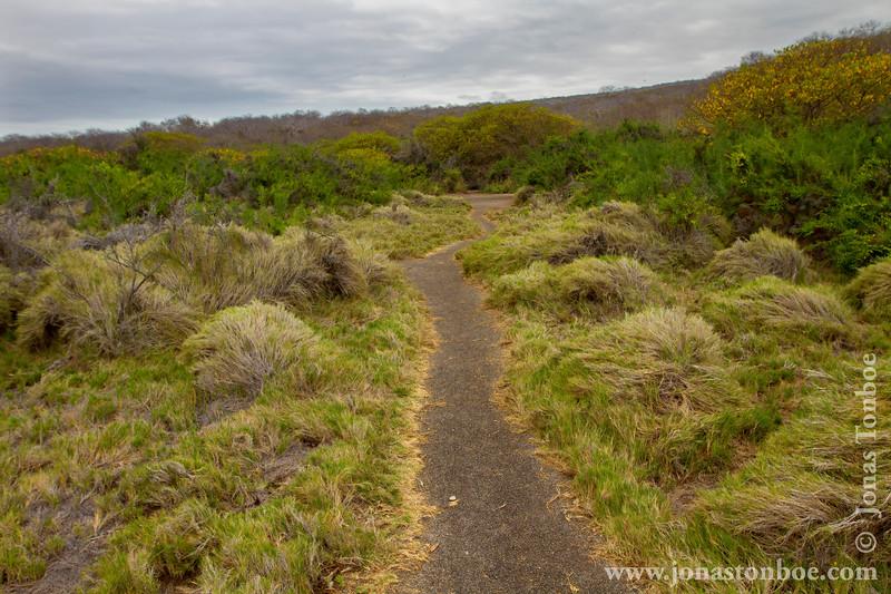 Island Trail