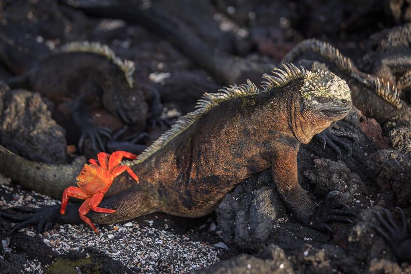 Galapagos-2726