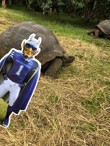 Flat Blue Devil and Galapagos tortoises